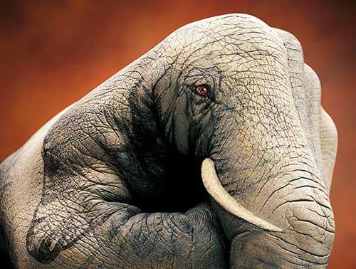 amazing-body-painting-elephant