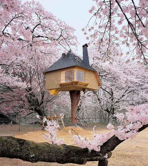 amazing-treehouses4