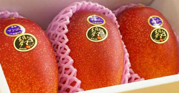 top-5-most-expensice-fruit-in-world-Taiyo-no-Tamago-Mangoes
