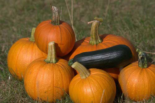 6-foods-for-younger-looking-skin-pumpkin