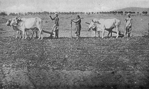 8-un-known-facts-of-sardar-ptel-Farmer-by-Birth-and-Nature
