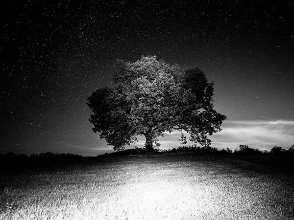 people-should-not-go-near-the-ficus-religiosa-at-night