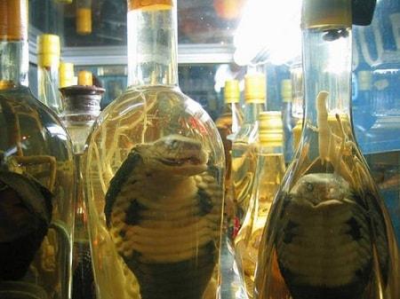 Snake-Wine-min