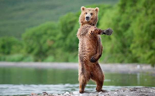 amazing-animal-photos-bear