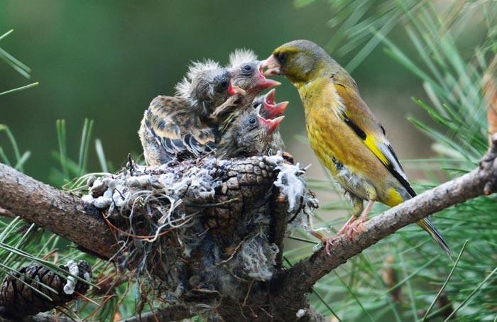amazing-animal-photos-bird-feeding