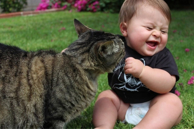 amazing-animal-photos-cute-baby-and-cat