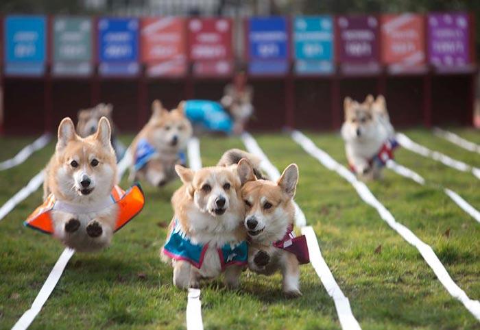 amazing-animal-photos-dog-race