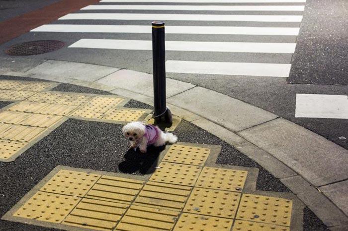 amazing-animal-photos-dog-tied