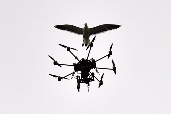 amazing-animal-photos-drone-bird