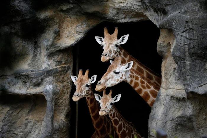 amazing-animal-photos-jiraph