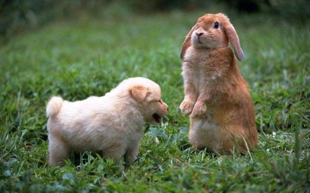 amazing-animal-photos-rabbit-and-puppy