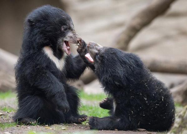 bears-play-in-the-zoo-fundabook