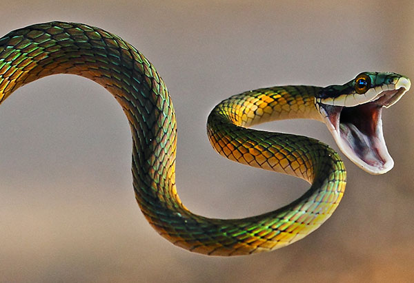 interesting-facts-about-snakes-fundabook