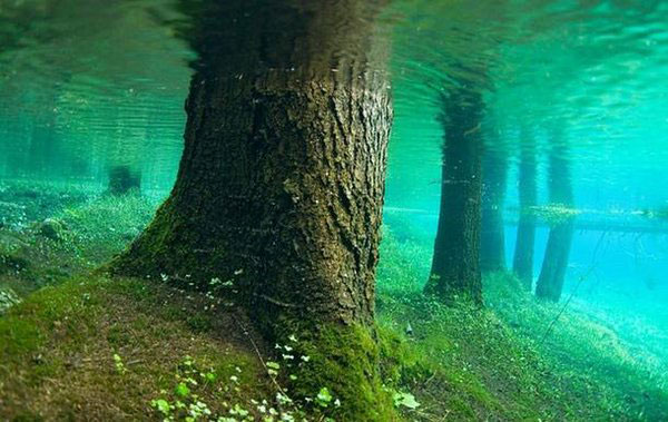 top-10-amazing-events-on-earth-underwater-forest-of-lake-kaindy