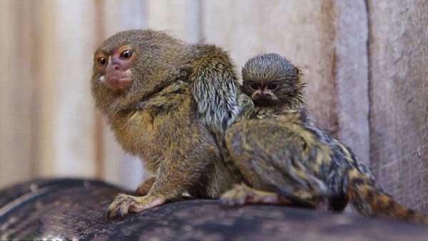 small-monkey-babies