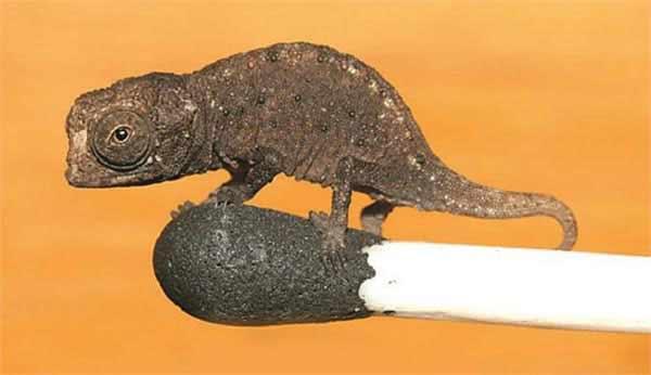 the-small-lizard